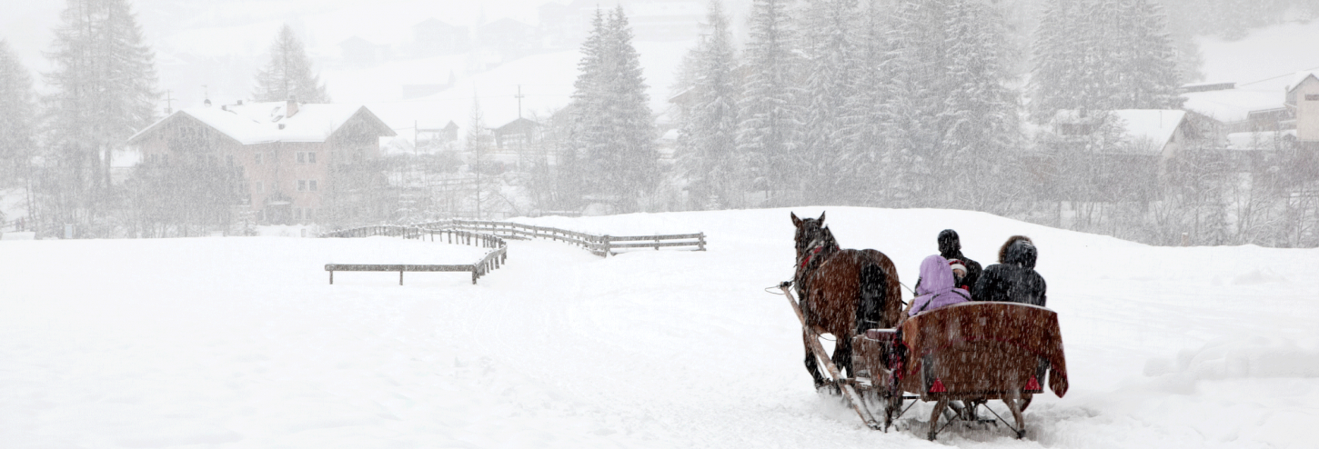 horse drawn sleigh with snow falling in colorado